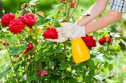 Proven Gardening Company in Hounslow, TW3